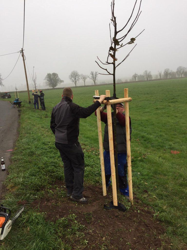 Neue Bäume für Gompertshausen